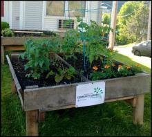 community gardens 2